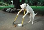 apprenez_la_proprete_a_votre_chien_en_6_semaines_ou_moins1