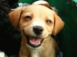 chien-heureux-9