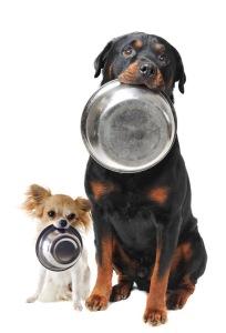 Comment-choisir-les-bonnes-croquettes-pour-chien1